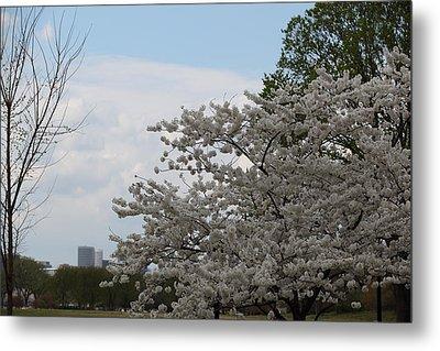 Cherry Blossoms - Washington Dc - 011344 Metal Print by DC Photographer