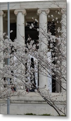 Cherry Blossoms With Jefferson Memorial - Washington Dc - 01132 Metal Print by DC Photographer