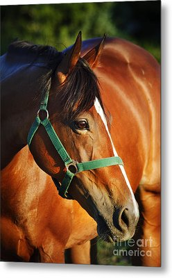 Chestnut Horse Metal Print by Jelena Jovanovic