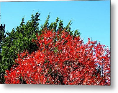 Metal Print featuring the photograph Christmas Color by David  Norman
