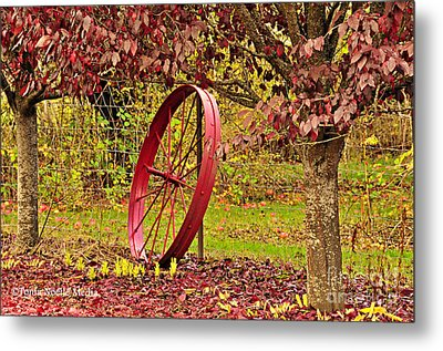 Metal Print featuring the photograph Circle Of Life by Tonia Noelle