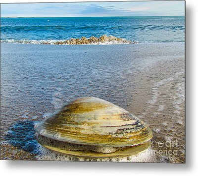 Clam's Point Of View Metal Print by Joe Faragalli