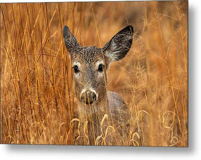 Close Encounter Metal Print by James Marvin Phelps