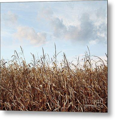 Metal Print featuring the photograph Closeup Of Corn Stalks  by Sandra Cunningham