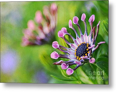Colors Of Spring Metal Print by Darren Fisher