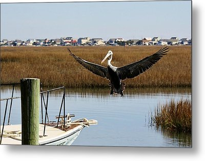 Coming Aboard Metal Print by Paulette Thomas