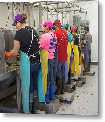 Commercial Oyster Processing Metal Print by Jim West