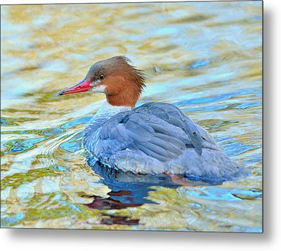Metal Print featuring the photograph Common Merganser by Kathy King
