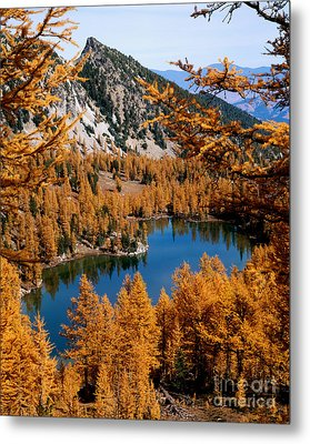 Cooney Lake And Martin Peak Metal Print by Tracy Knauer