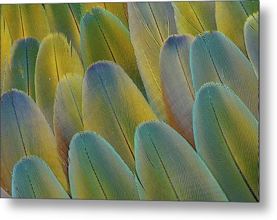 Covert Wing Feathers Of The Camelot Metal Print by Darrell Gulin