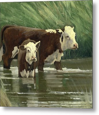 Cows In The Pond Metal Print by John Reynolds