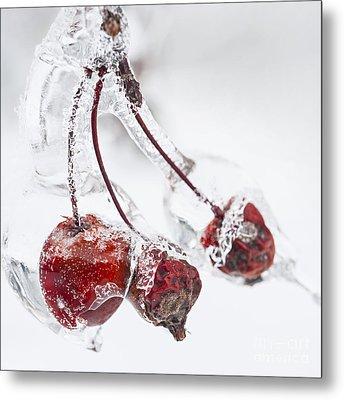 Crab Apples On Icy Branch Metal Print by Elena Elisseeva