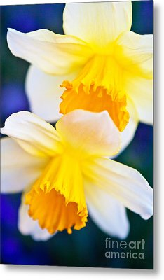 Metal Print featuring the photograph Daffodils by Roselynne Broussard
