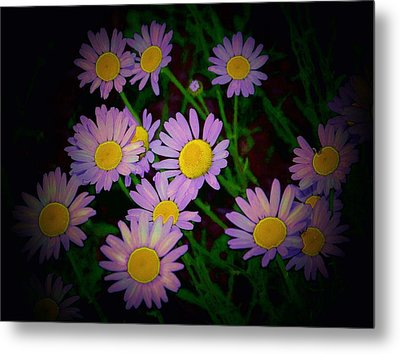 Daisies I Metal Print by Shirley Moravec