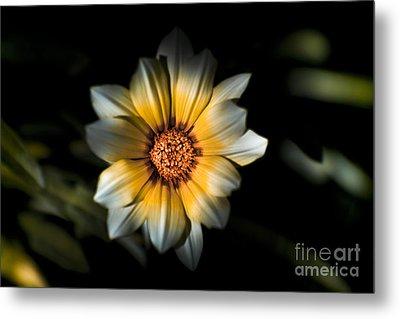 Dark Daisy Flower Metal Print