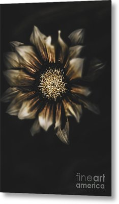 Dark Grave Flower By Tomb In Darkness Metal Print by Jorgo Photography - Wall Art Gallery
