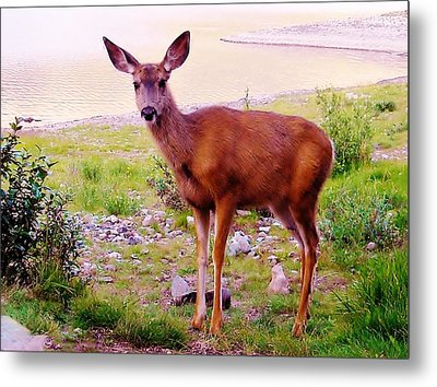 Deer Visit Metal Print by Cathy Long
