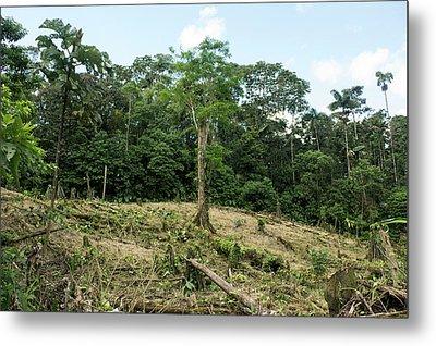 Deforestation In The Ecuadorian Amazon Metal Print by Dr Morley Read