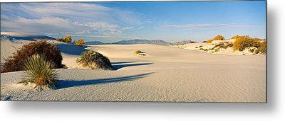 Desert Plants In A Desert, White Sands Metal Print by Panoramic Images