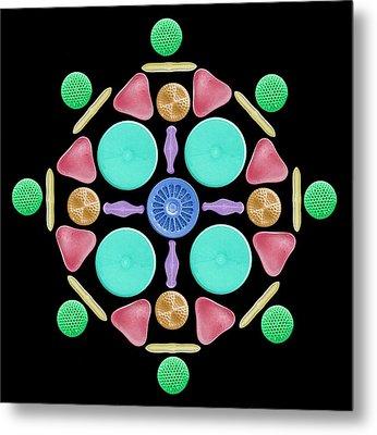 Diatoms And Radiolaria Metal Print