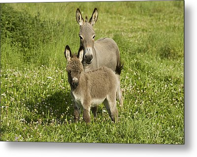 Donkey With Foal Metal Print