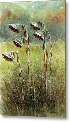Dried Up Sunflower Patch Metal Print by Steven Schultz
