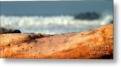 Drift Wood Metal Print by Henrik Lehnerer