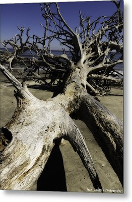 Driftwood Metal Print by Fran Gallogly
