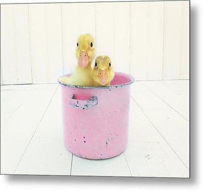 Duck Soup  Metal Print by Amy Tyler