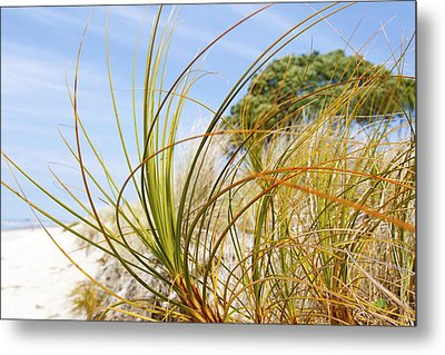 Dune Grass Metal Print by Les Cunliffe