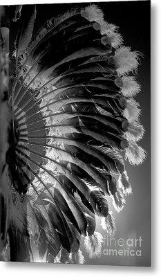 Eagle Feathers Metal Print by Chris Brewington Photography LLC