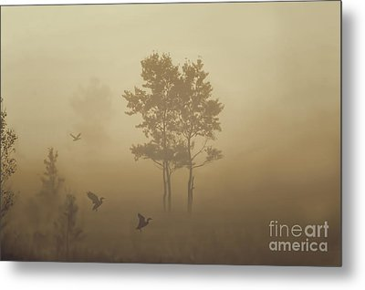 Early Morning Canaan Valley Metal Print by Dan Friend
