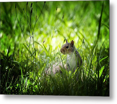 Metal Print featuring the photograph Eastern Gray Squirrel by Zoe Ferrie