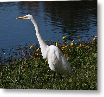 Egret In Flowers 11x14 Horiz Metal Print