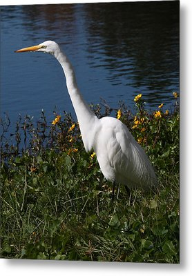 Egret In Flowers 8x10 Metal Print