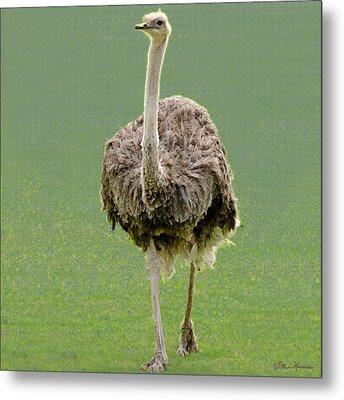 Emu Metal Print by Ellen Henneke