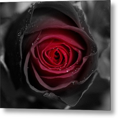 Eternally Yours Rose Metal Print by Marie Neder