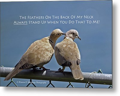 Eurasian Collared Dove Metal Print