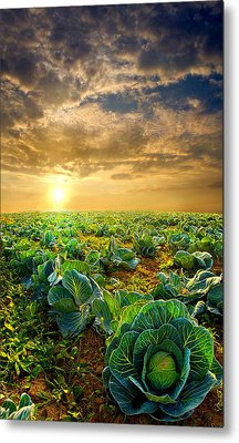 Fall Harvest Metal Print by Phil Koch