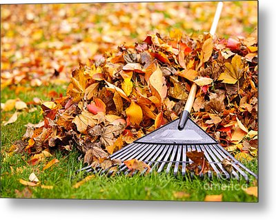 Fall Leaves With Rake Metal Print by Elena Elisseeva