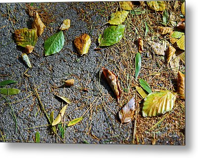 Fallen Leaves Metal Print by Carlos Caetano