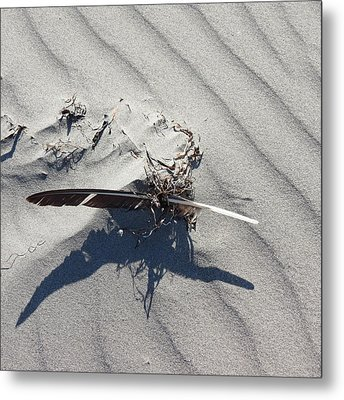 Metal Print featuring the photograph Feather by Aurora Levins Morales