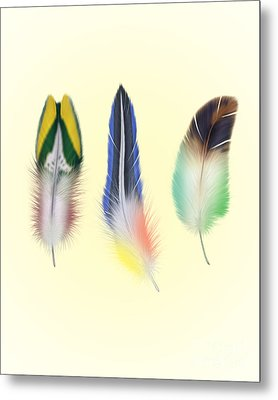 Feathers Metal Print by Mark Ashkenazi