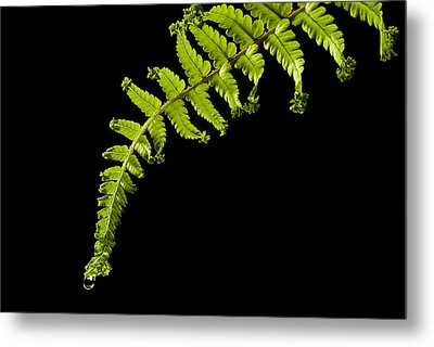Fern With Raindrop Metal Print by Trevor Chriss