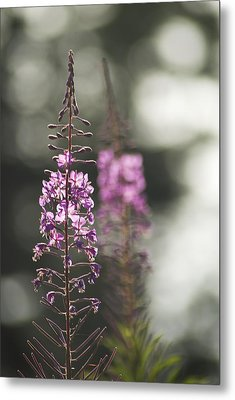 Metal Print featuring the photograph Fireweed by Yulia Kazansky