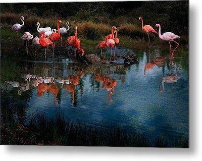 Flamingo Convention Metal Print by Melinda Hughes-Berland