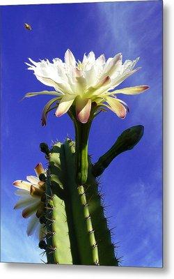 Flowering Cactus 3 Metal Print