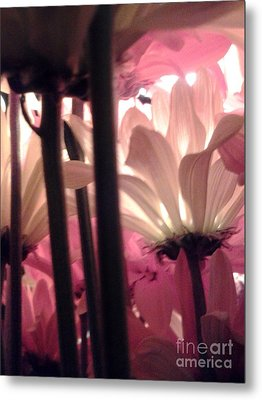 Flowerlife2 Metal Print by Susan Townsend