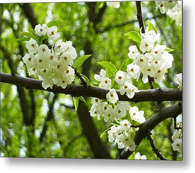 Flowers In The Spring Metal Print by Mike Ste Marie