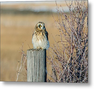 Fluff Beauty Metal Print by Yeates Photography